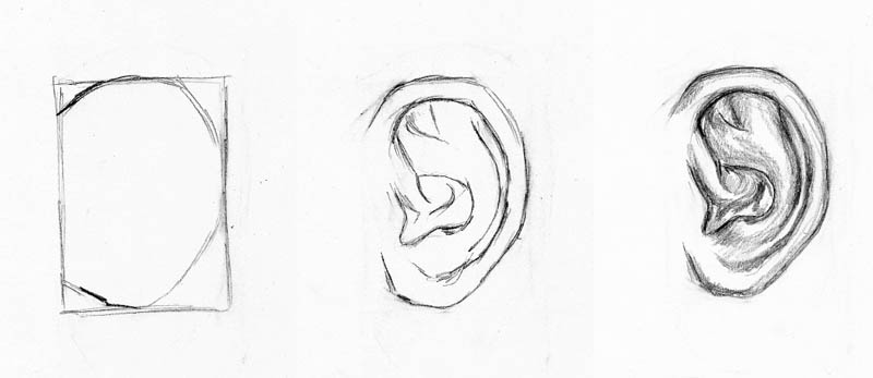Line Drawing Ear : Gallery for gt line drawing face profile